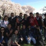 The annual Cherry Blossoms Festival is one of the many reasons to take English classes in Washington DC