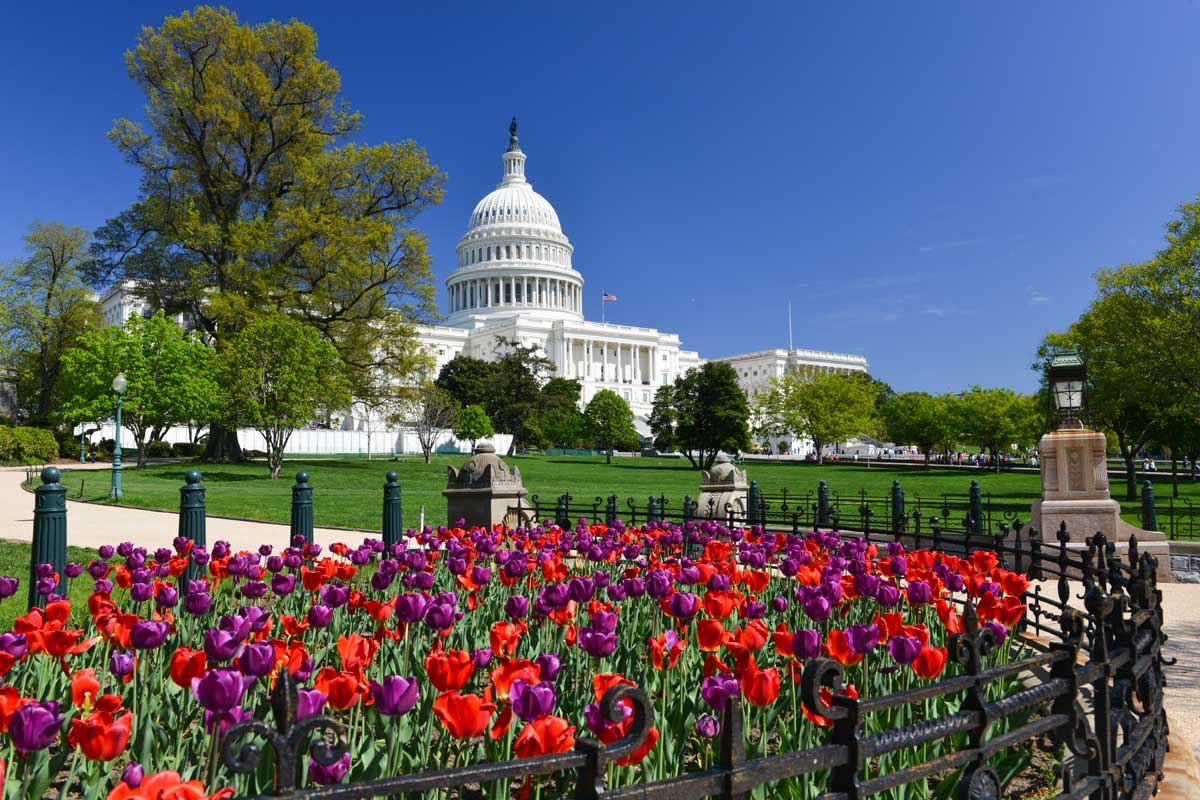 Top 10 Spring Activities in DC for Students